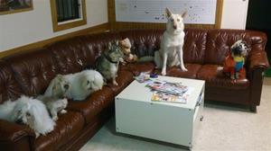 Styrelsemöte