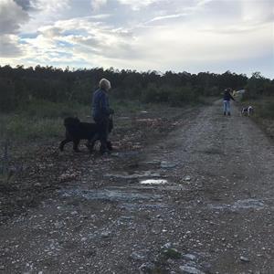 Avslutning med hundmöteskurs