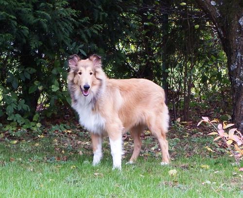 Lassie_i_skogen_DSCF3979