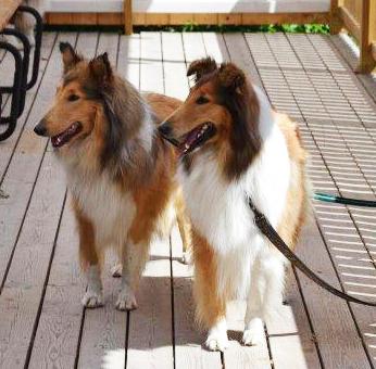 Lassie_Signe DSC_2273