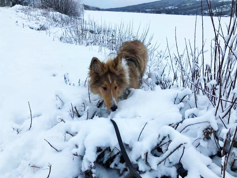 östen bland snö