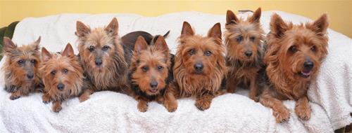 Alla 7 hundar på 1 kort 011