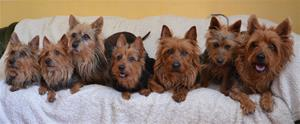 Alla 7 hundar på 1 kort 006