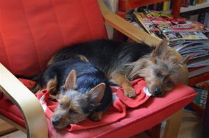trötta hundar 005
