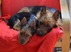 Alla 4 hundar på 1 kort m.m 001