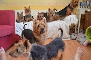 Alla 7 hundar på 1 kort 035