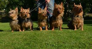 5 hundar en bild