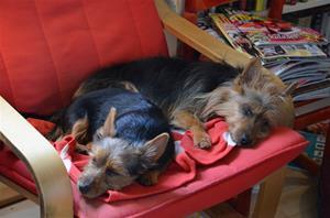 trötta hundar 001