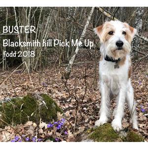 Buster (Blacksmith hill Pick Me Up) och Petra Lilja_KOMET