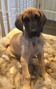 Bentley 10 veckor