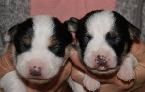 Hane 2 och 1, 11 dagar gamla (2)
