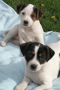 Daisy och Hjärtrud