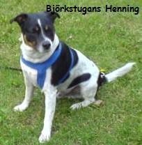 Björkstugans Henning, heter jag.