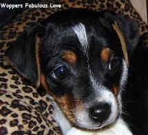 Woppers Fabulous Love