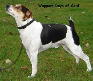 Woppers Days of Gold, Karat