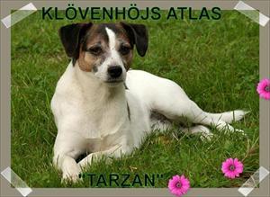 Klövenhöjs Atlas Tarzan