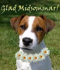midsommarhund