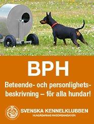 BPH-beteende-och-personlighetsbeskrivning-for-alla-hundar