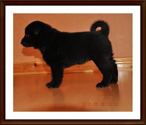 2010-05-08 Kaxa 5 veckor gammal. Väger 2628 gram