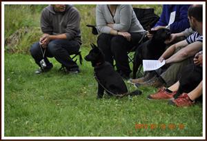 2010-08-15 Kullskogens BB Isa en 4 månaders valp till