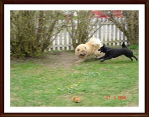 2008-04-27 Full fart med kompisen Tösen