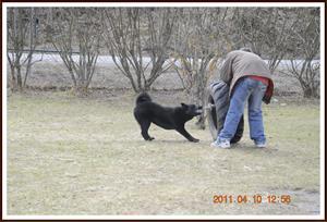 2011-04-10 Billy tränar Kaxa