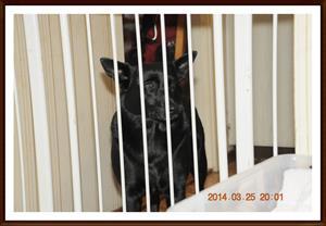 2014-03-25 Kaxa tycker det är orättvist att hon inte får vara med