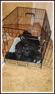 2014-05-10 Buren är trygg att ligga o sova i