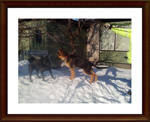 2011-01-27 Nikko & Dixy