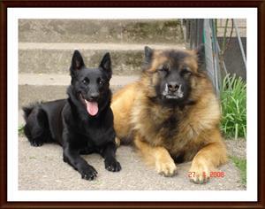 2008-04-27 Dixy & Gutten