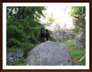 2008-07-09 Skogsmonstret