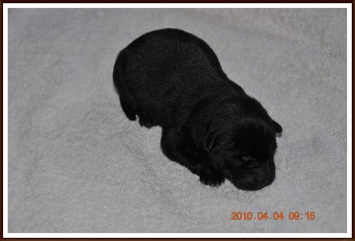 2010-04-04 Ett dygn gammal