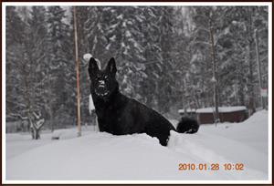 2010-01-28 Dixy på snöhögen
