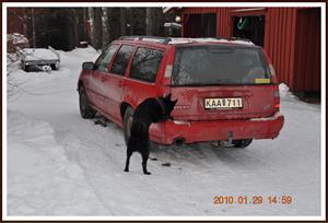 2010-01-29 Brage har hittat Dixy