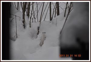 2011-01-01 Vesslan 10