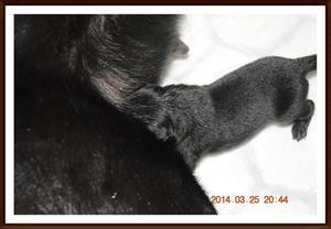 2014-03-25 Första valpen är född en tik