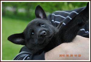 2010-05-29 Kaxa 8 veckor gammal. Väger 4 kg utan gips