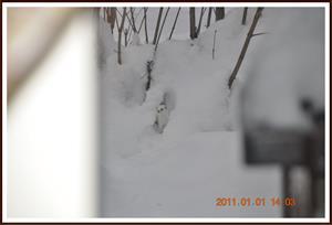 2011-01-01 Vesslan 14