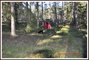 2011-04-24 Dixy tränar viltspår