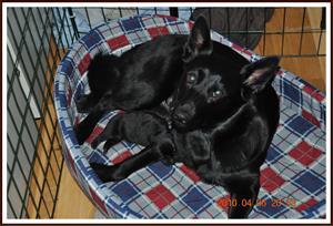 2010-04-06 Mys med mamma
