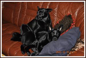 2010-12-16 Dixy & Kaxa Kramas 1