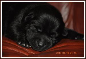 2010-04-10 Kaxa sover i soffan