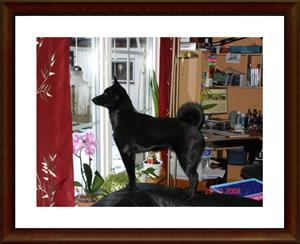 2008-03-29 Har fått syn på rådjur som går förbi utanför fönstret
