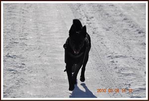2010-03-08 Dixy på promenad på sin 3 årsdag