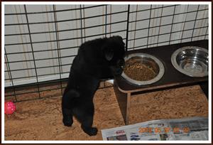 2010-05-07 Mammas matskål är mycket godare att ur än min egna