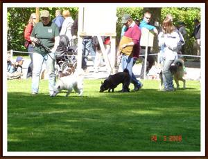 2008-05-24 Lika som bär. Dixy & en Svensk vit älghundstik som hon träffade på hundparaden i Tullgarn