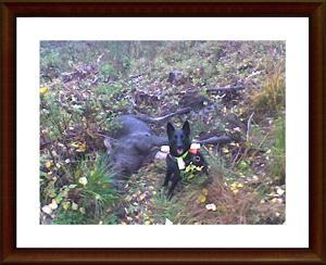 2009-10-24 Dixy med sin första älg
