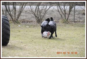 2011-04-10 Tjejerna älskar sin boll