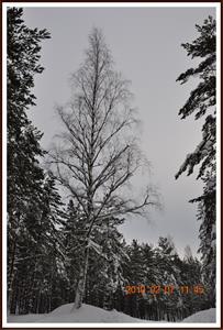 2010-02-07 Vinterlandskap  Fjällmossen 16