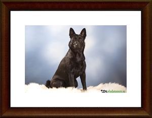 Dixy Hund 2008